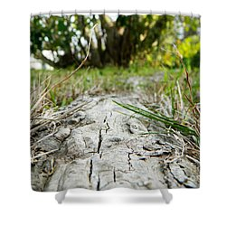 The Root Of Happiness Shower Curtain by Andrea Anderegg