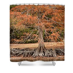 Shower Curtain featuring the photograph The Root Of It All by Rebecca Davis