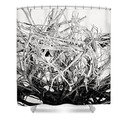 The Roots In Black And White Shower Curtain by Lisa Russo