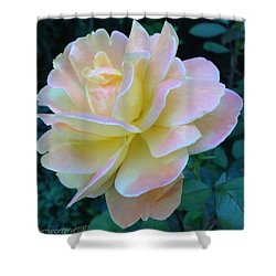 The Rose For A Rose Is A Rose Is A Rose Shower Curtain