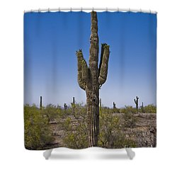 The Saguaro Cactus Ready To Bloom Shower Curtain by Kirt Tisdale
