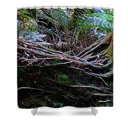 Shower Curtain featuring the photograph The Salamander Tree by Evelyn Tambour