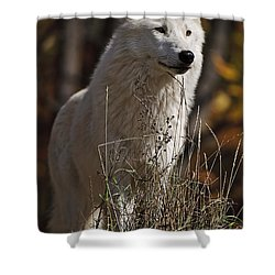 Shower Curtain featuring the photograph The Sentinel by Wolves Only