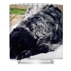 The Shaggy Dog Named Shaddy Shower Curtain by Marian Cates