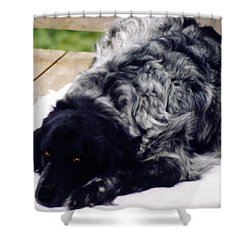 The Shaggy Dog Named Shaddy Shower Curtain