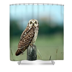 The Short-eared Owl  Shower Curtain