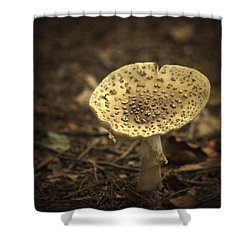 The Slow Passing Of Autumn Shower Curtain by Evelina Kremsdorf