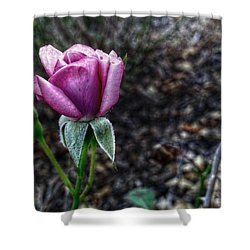 The Solitary One Shower Curtain by Linda Unger