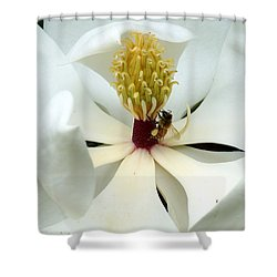 The Southern Magnolia Shower Curtain by Kim Pate