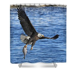 Shower Curtain featuring the photograph The Spoils by Coby Cooper