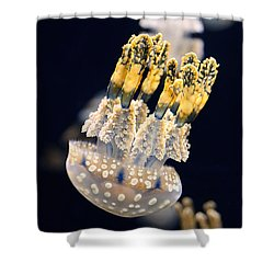 The Spotted Jelly Or Lagoon Jelly Mastigias Papua Shower Curtain by Jamie Pham