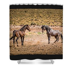 Shower Curtain featuring the photograph The Standoff  by Janis Knight