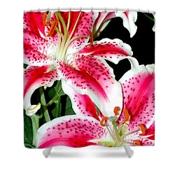 The Star Lily  Shower Curtain