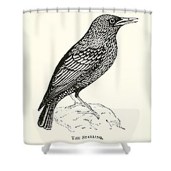 The Starling Shower Curtain by English School