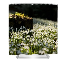 The Stump And The Snowdrops Shower Curtain by Anne Gilbert