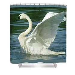 The Swan Rises  Shower Curtain by Jeff Swan