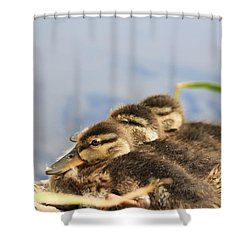 Shower Curtain featuring the photograph The Three Amigos by Amy Gallagher