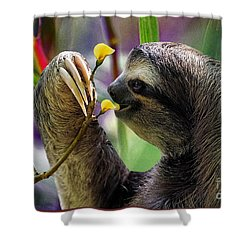 The Three-toed Sloth Shower Curtain by Gary Keesler