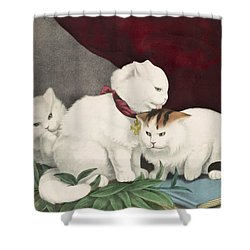 The Three White Kittens Circa 1856 Shower Curtain by Aged Pixel