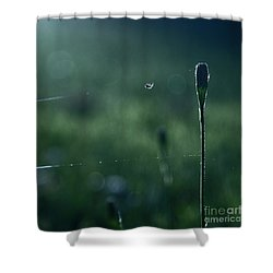The Tightrope Walker  Shower Curtain by Aimelle