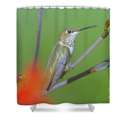 The Tongue Of A Humming Bird  Shower Curtain by Jeff Swan