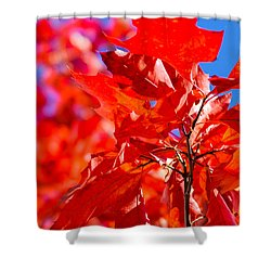 The Torch Shower Curtain by Alexander Senin