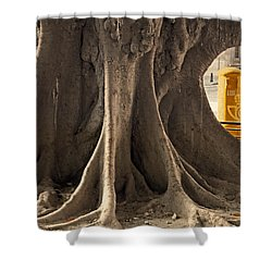 The Tree And The Post Box Shower Curtain by Mary Machare