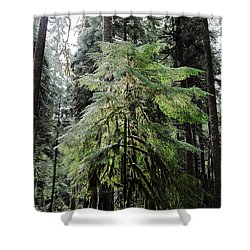 The Tree In The Forest Shower Curtain
