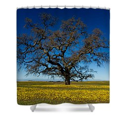 The Tree On Table Mountain Shower Curtain
