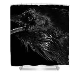 The Trickster Shower Curtain