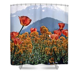 The Tulips In Bloom Shower Curtain