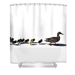 The Ugly Duckling  Shower Curtain by Lars Lentz