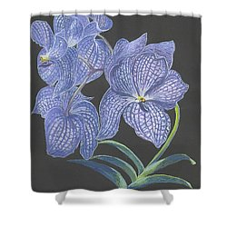 Shower Curtain featuring the painting The Vanda Orchid by Carol Wisniewski