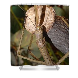 The Walking Stick Shower Curtain by Sara  Raber