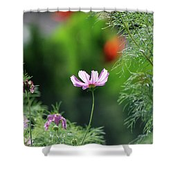 Shower Curtain featuring the photograph The Warmth Of Summer by Thomas Woolworth
