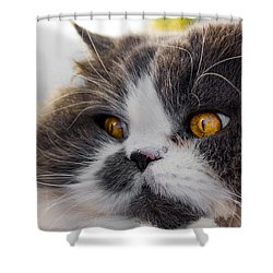 The Watching Cat Shower Curtain by Daniel Precht