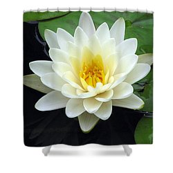 Shower Curtain featuring the photograph The Water Lilies Collection - 02 by Pamela Critchlow