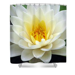 Shower Curtain featuring the photograph The Water Lilies Collection - 03 by Pamela Critchlow