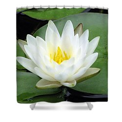 Shower Curtain featuring the photograph The Water Lilies Collection - 04 by Pamela Critchlow