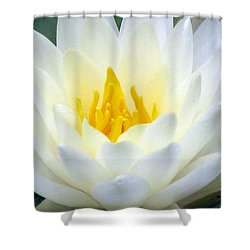 Shower Curtain featuring the photograph The Water Lilies Collection - 05 by Pamela Critchlow