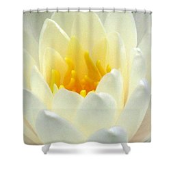 Shower Curtain featuring the photograph The Water Lilies Collection - 10 by Pamela Critchlow