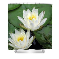 Shower Curtain featuring the photograph The Water Lilies Collection - 12 by Pamela Critchlow