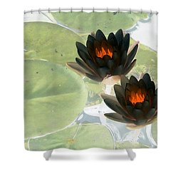 Shower Curtain featuring the photograph The Water Lilies Collection - Photopower 1039 by Pamela Critchlow