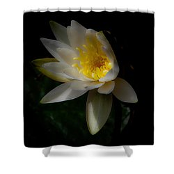 The Water Lily Shower Curtain