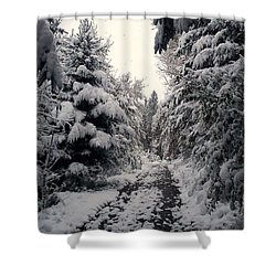 Shower Curtain featuring the photograph The Way In Snow by Felicia Tica