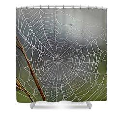 Shower Curtain featuring the photograph The Web by Kerri Farley