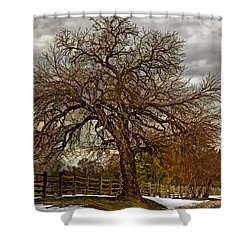 The Welcome Tree Shower Curtain