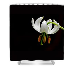 The White Form Of Lilium Martagon Named Album Shower Curtain