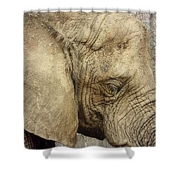 Shower Curtain featuring the photograph The Wise Old Elephant by Nikki McInnes