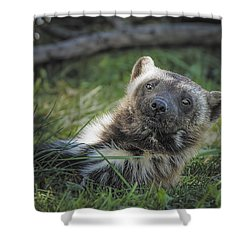 The Wolverine Skunk Bear Happy Face Shower Curtain by LeeAnn McLaneGoetz McLaneGoetzStudioLLCcom